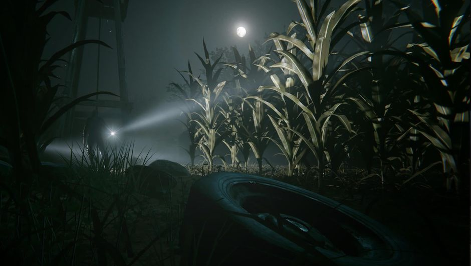 A view of a corn field at night with an approaching flash light
